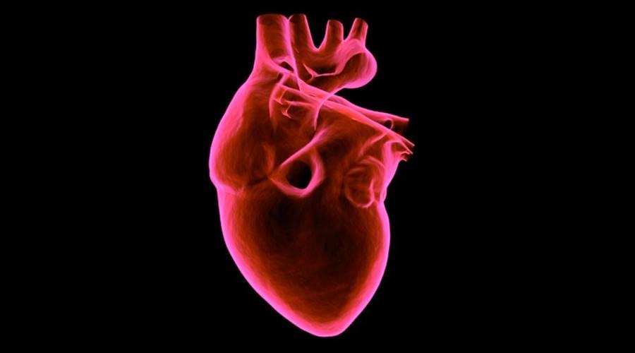 Napravljeni funkcionalni srčani mišići od matičnih ćelija