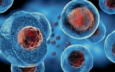 Šta je Graft VS Host Disease?